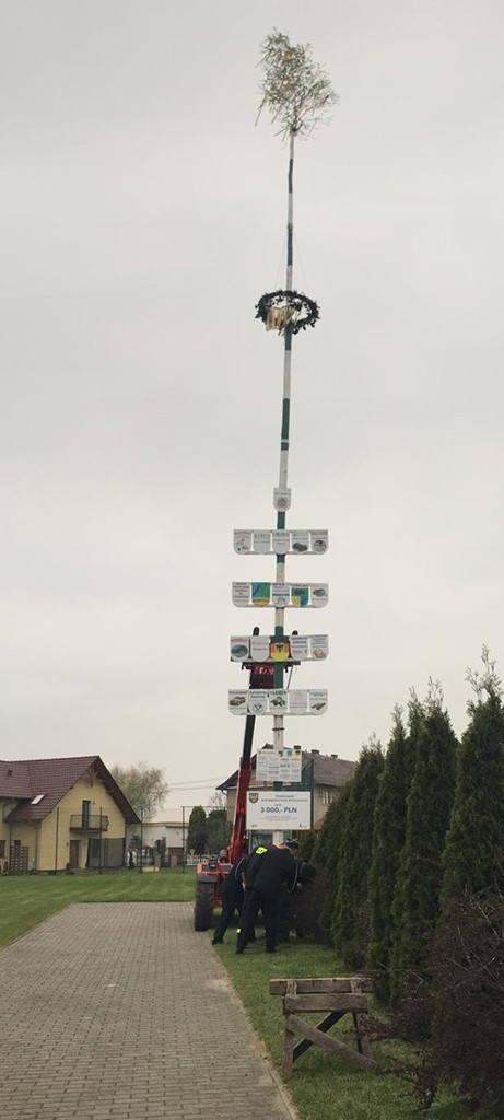 Maibaum w Boryczy.jpeg