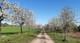 Galeria Wiosna w gminie partnerskiej Teicha